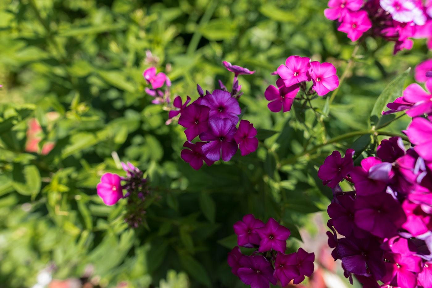 Purple flowers, ask Carol. . .