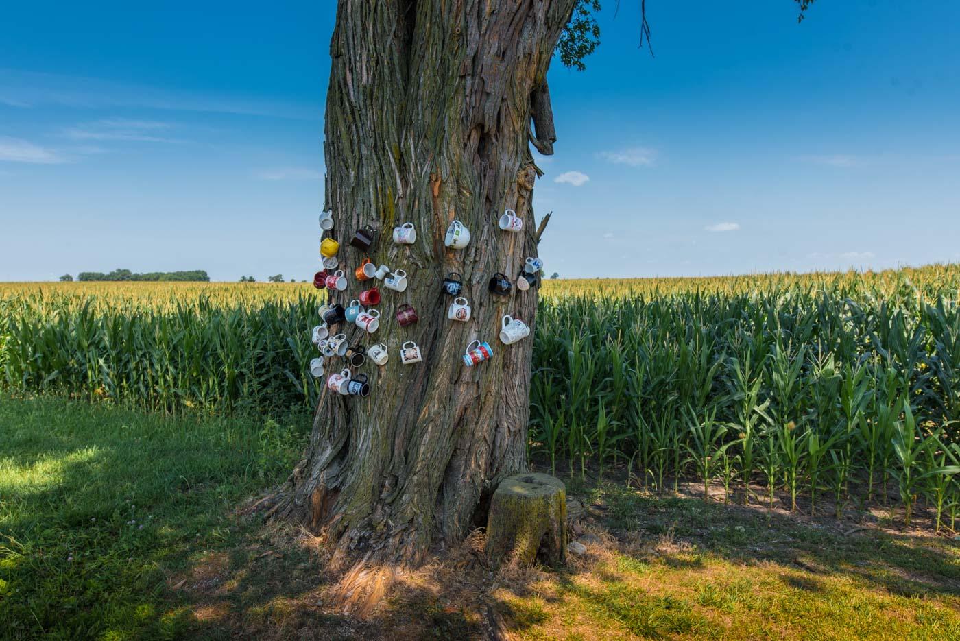 Kansas Illinois cup tree