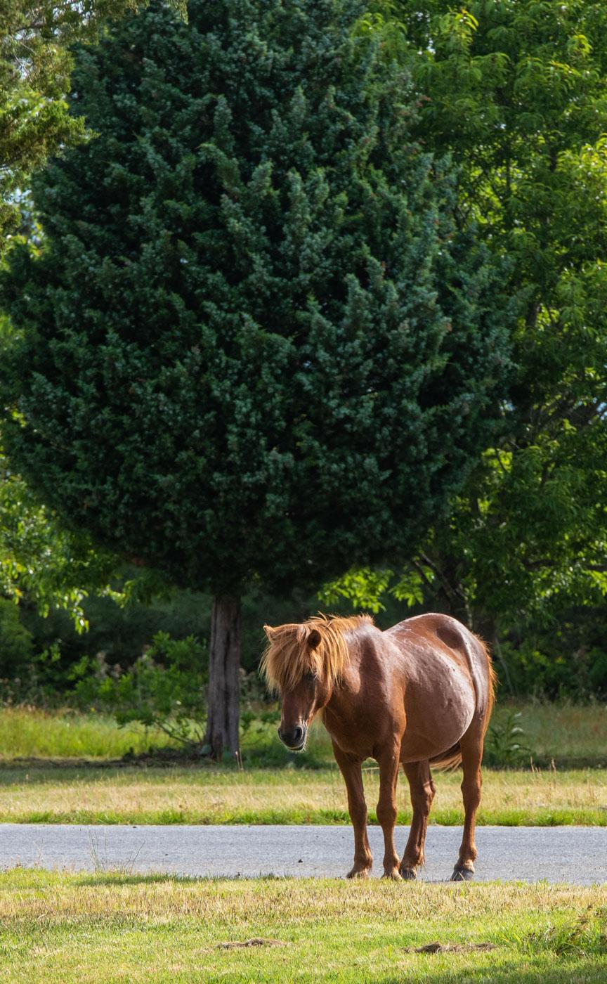 wild horse not looking wild