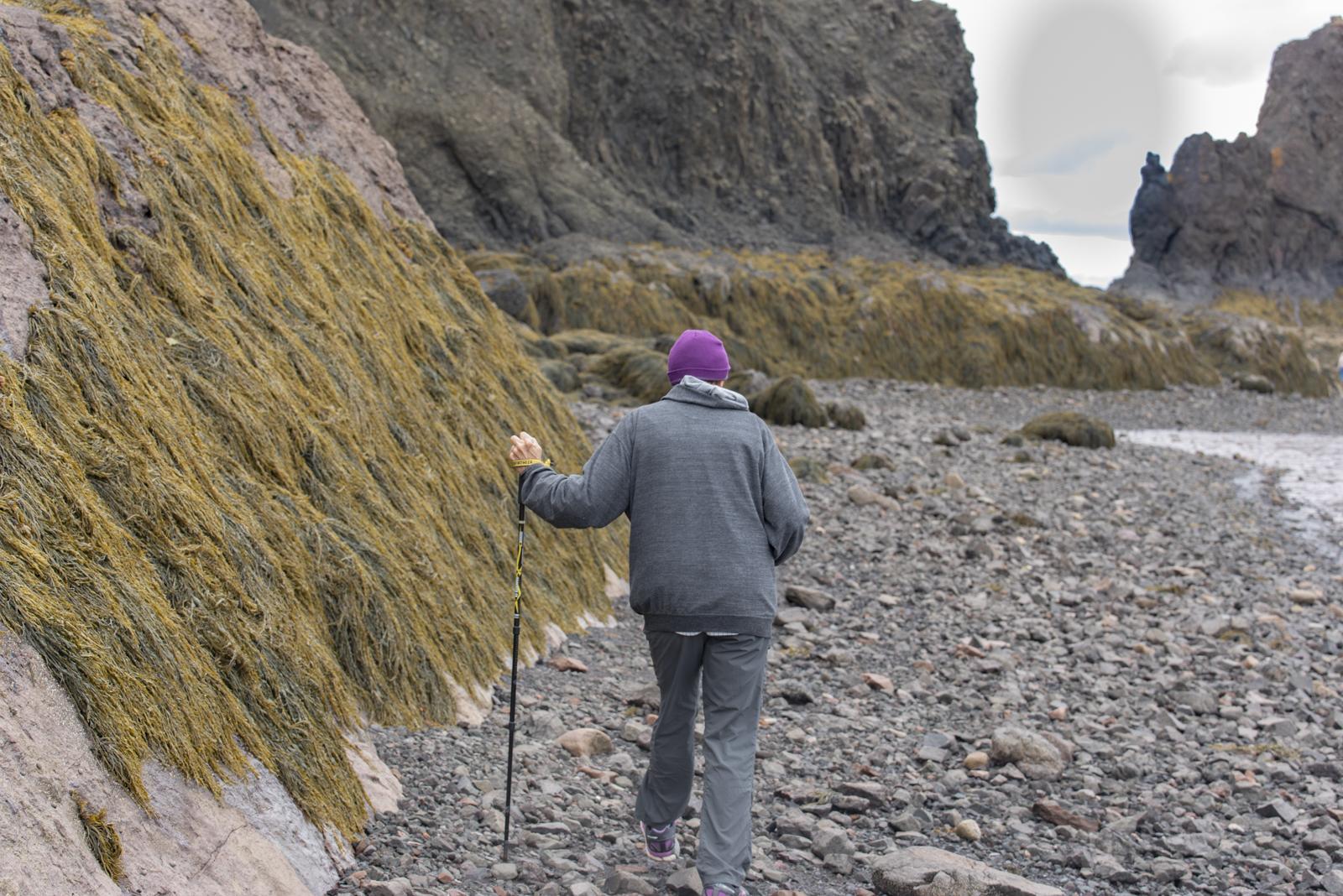 Interesting wall of seaweed.