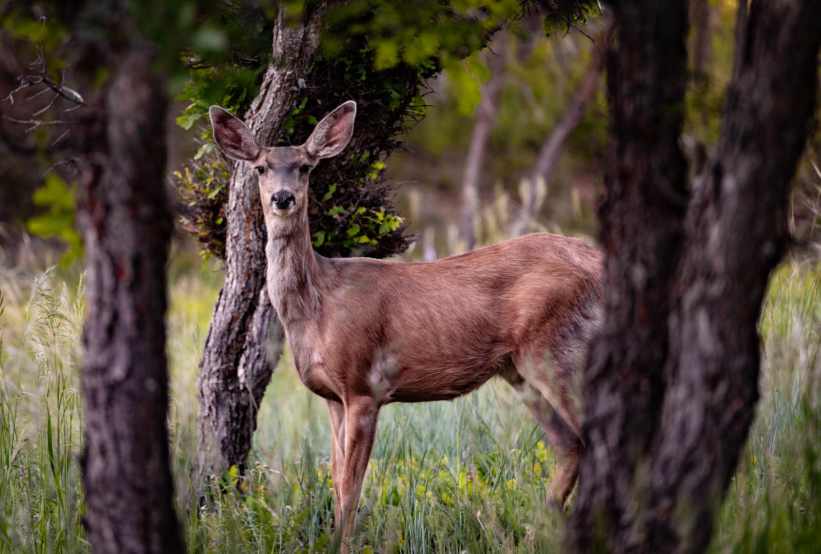 We spotted this deer on our walk.