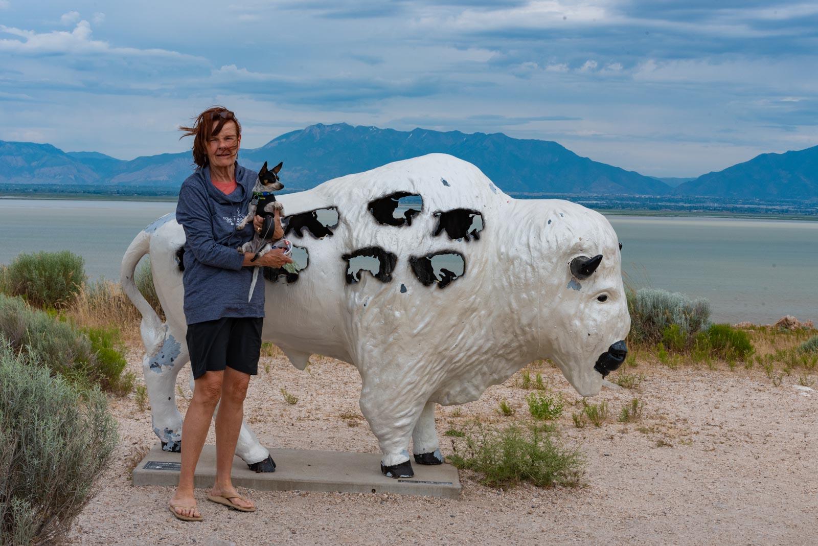 Not a real buffalo
