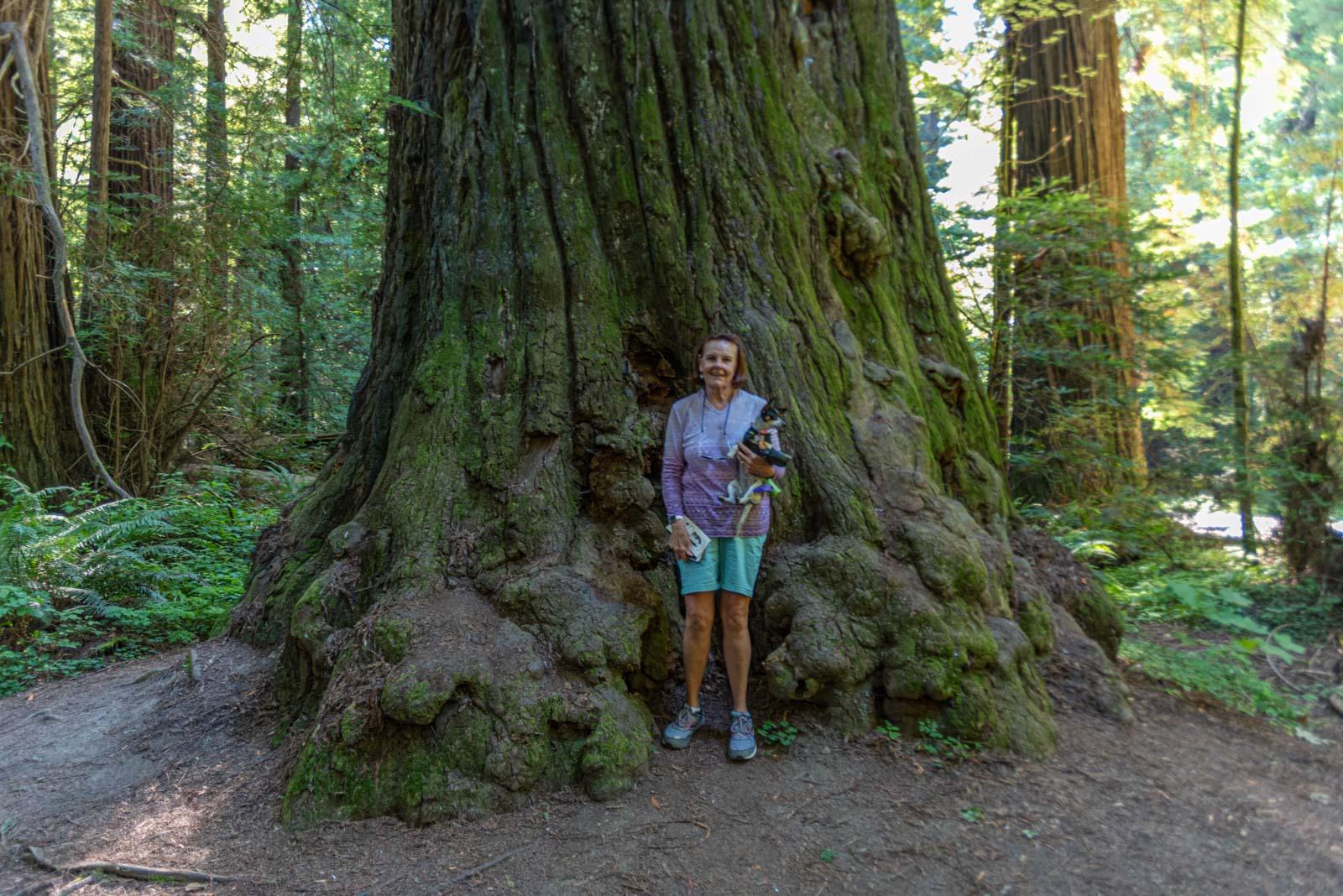 Redwoods are huge!