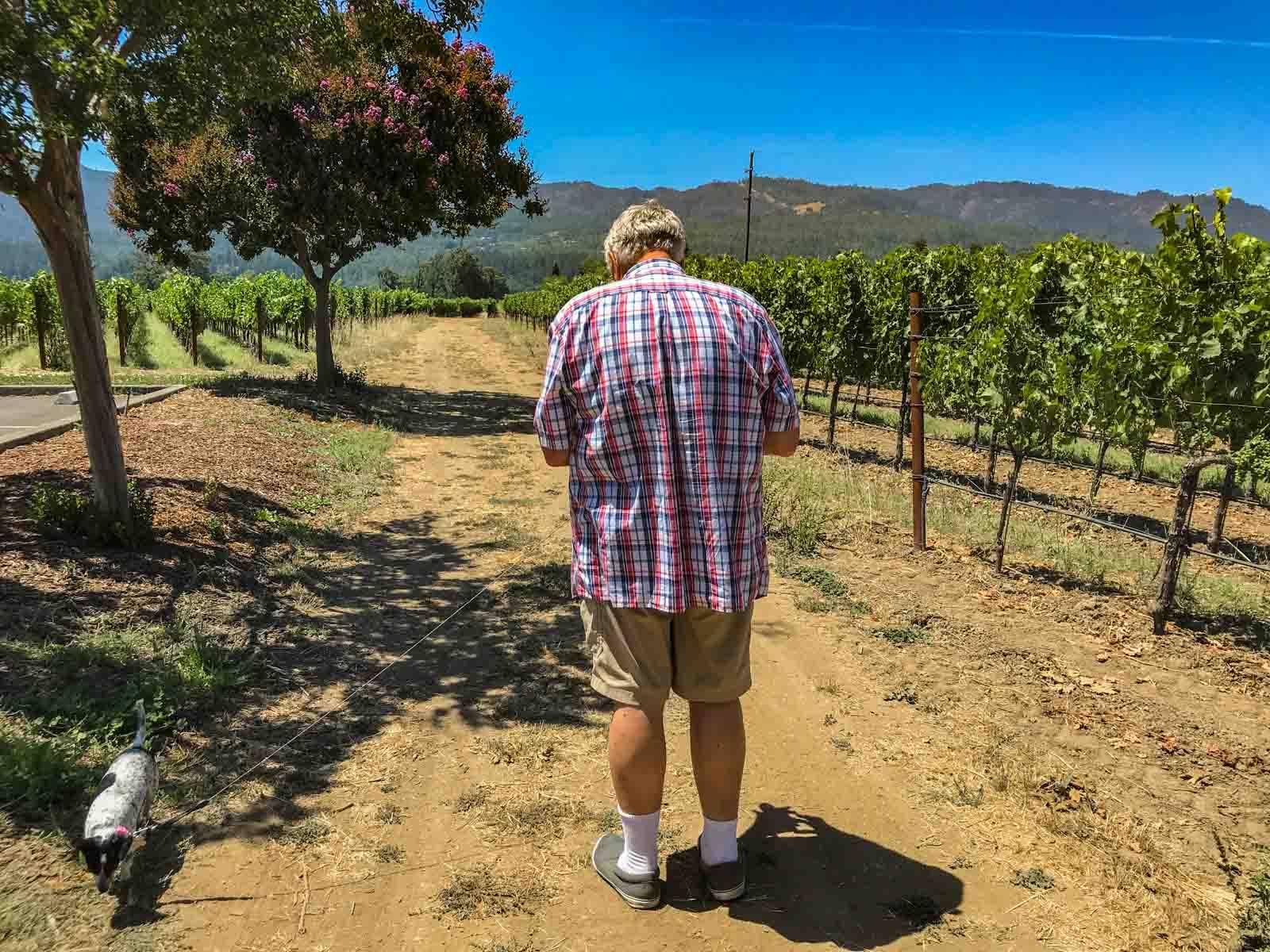 Walking Doodle Dog at a vineyard