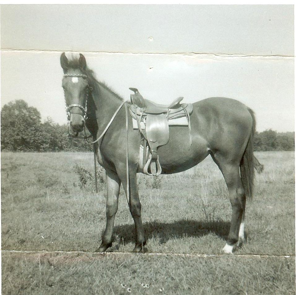 karenchandler.horse.jpeg