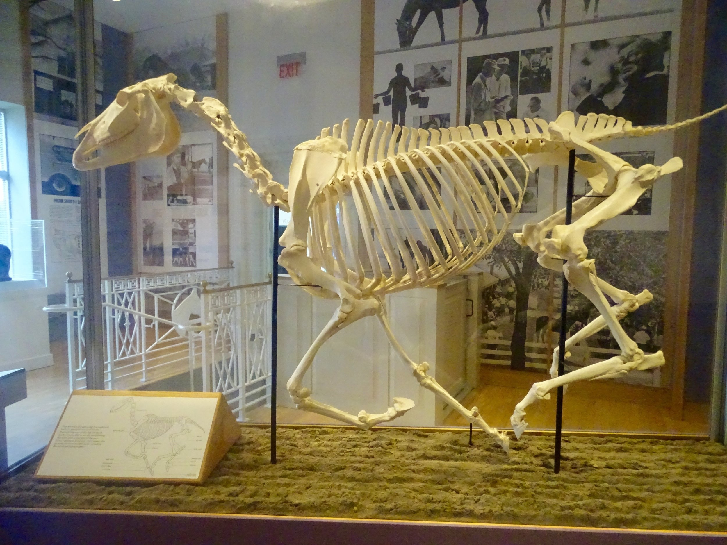 "The ""Anatomy of a Horse"" display"