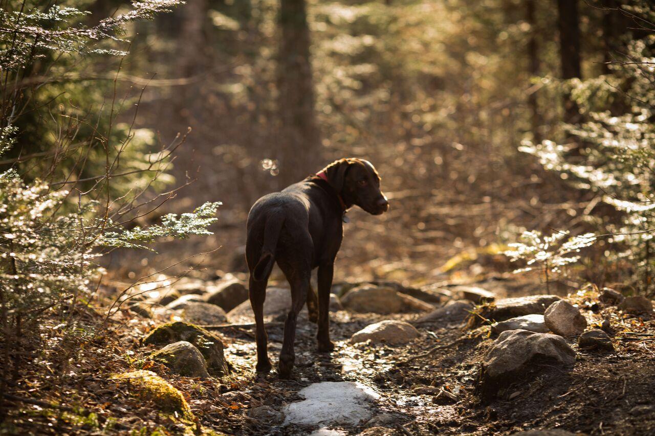 dog in path.JPG