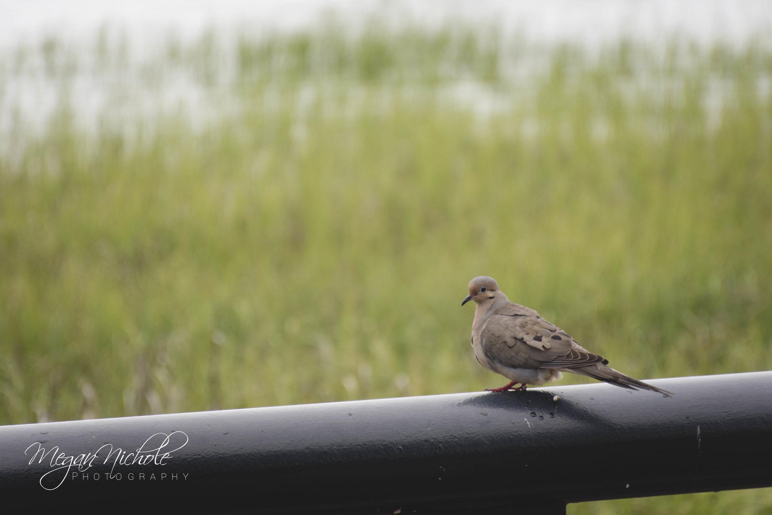 Charleston, South Carolina waterfront park bird