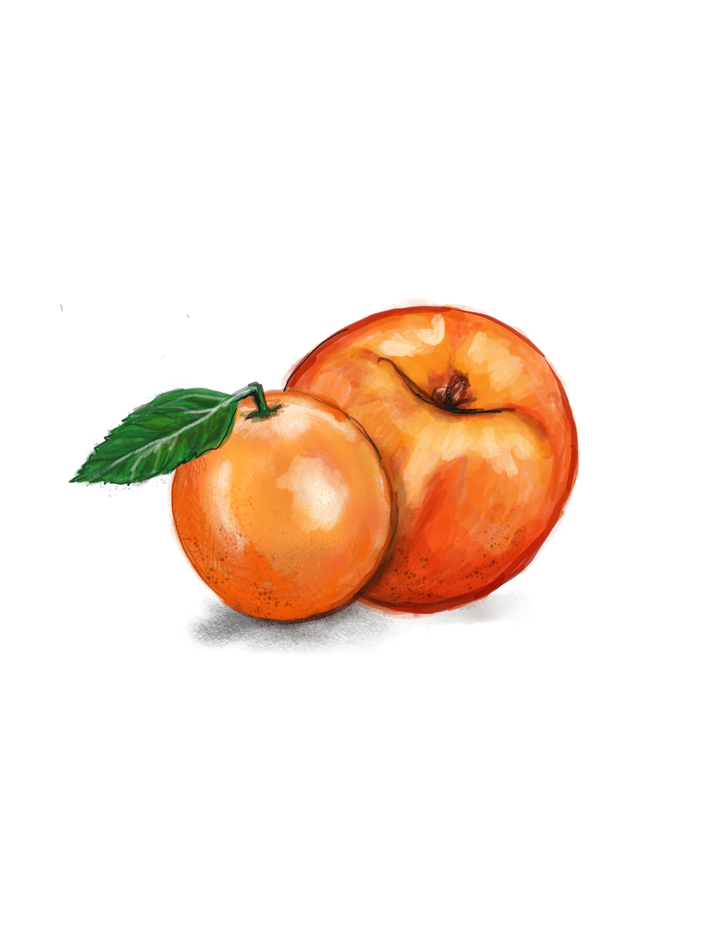 clementine-georgia.png
