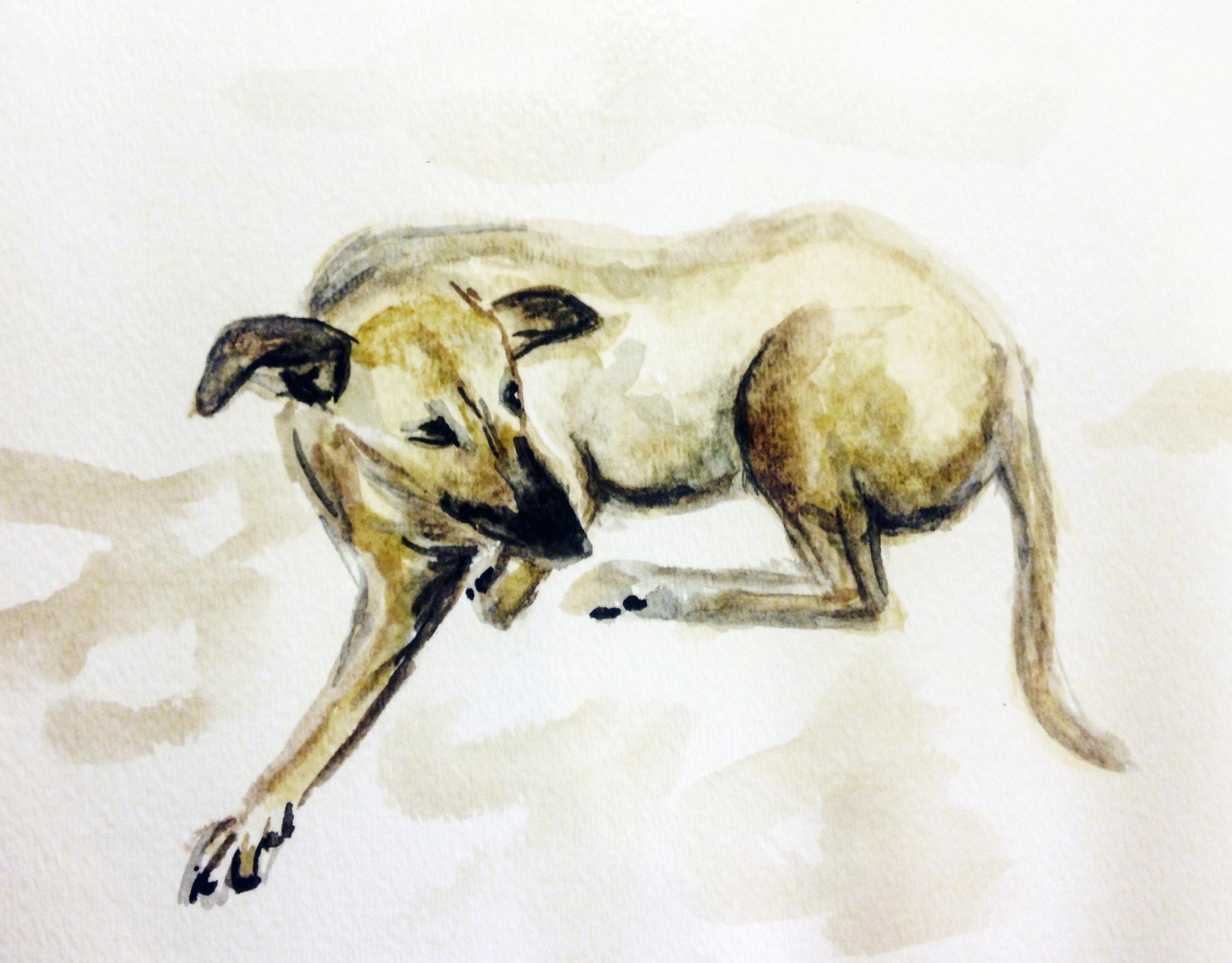 stray-dog-tulum.jpg