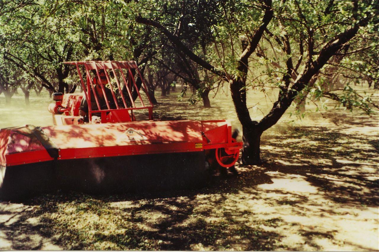 Almonds 5.jpg