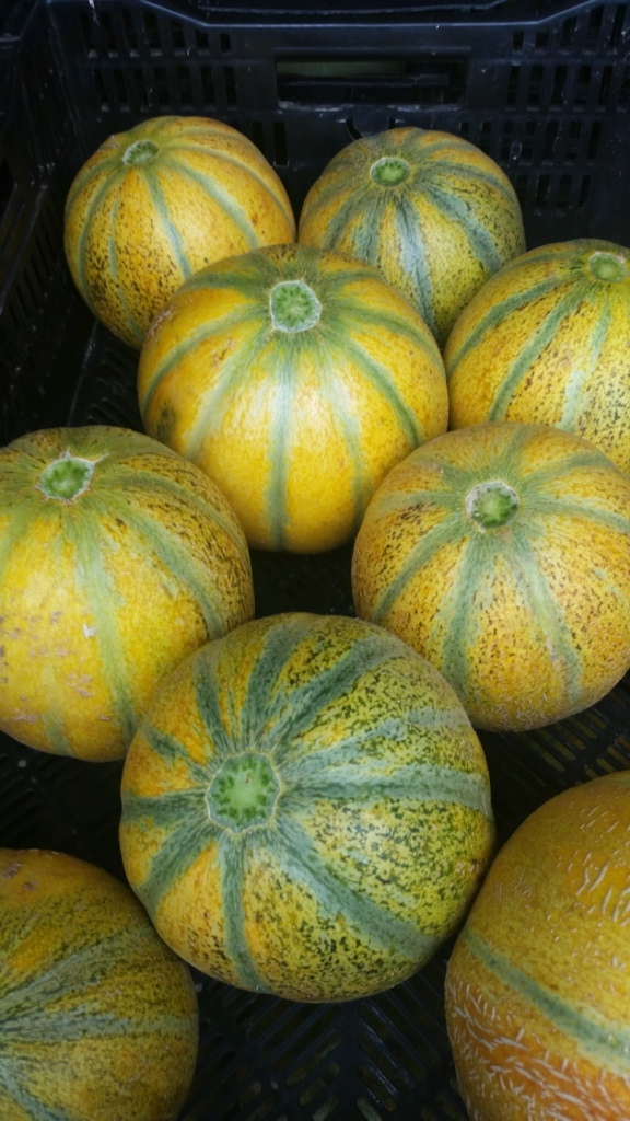 One of our best selling melons