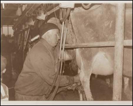 Don Rathbone Milking before retirement.