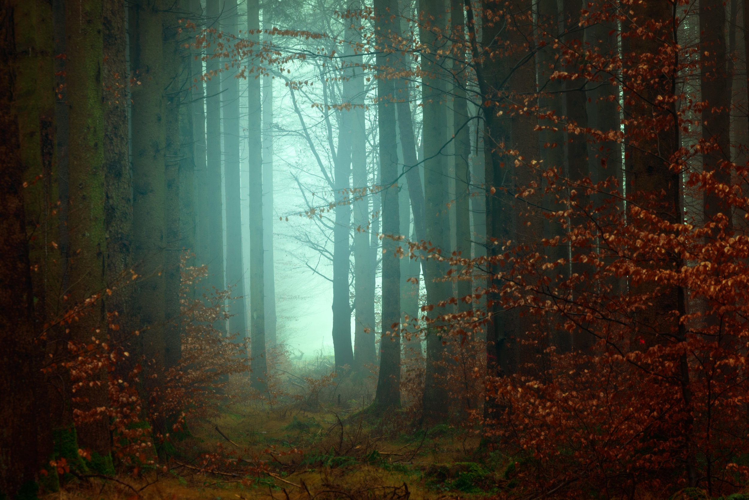 Spooky forest photo by Unsplash