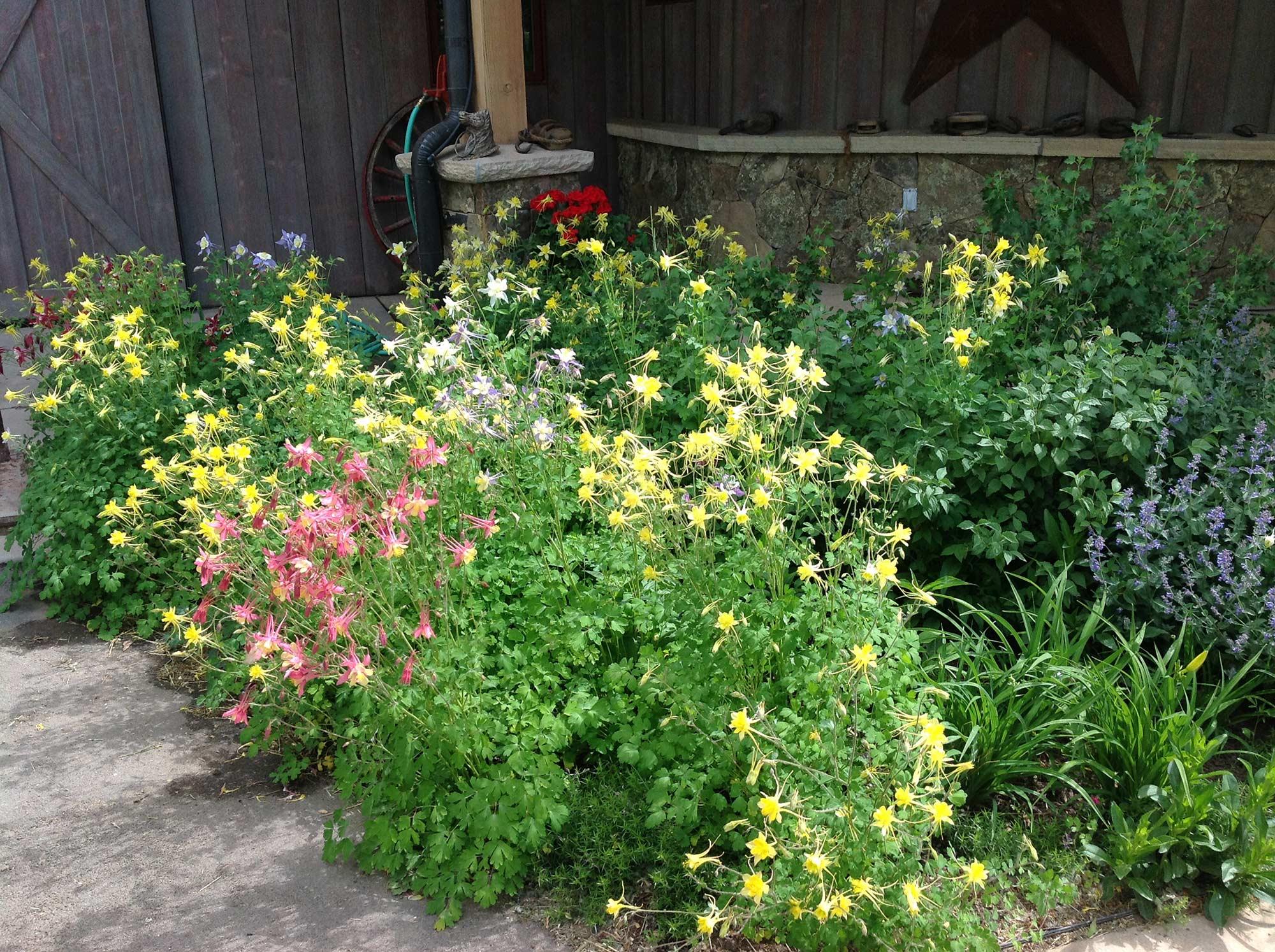 bigstock-Garden-Irrigation-System-38458408.jpg
