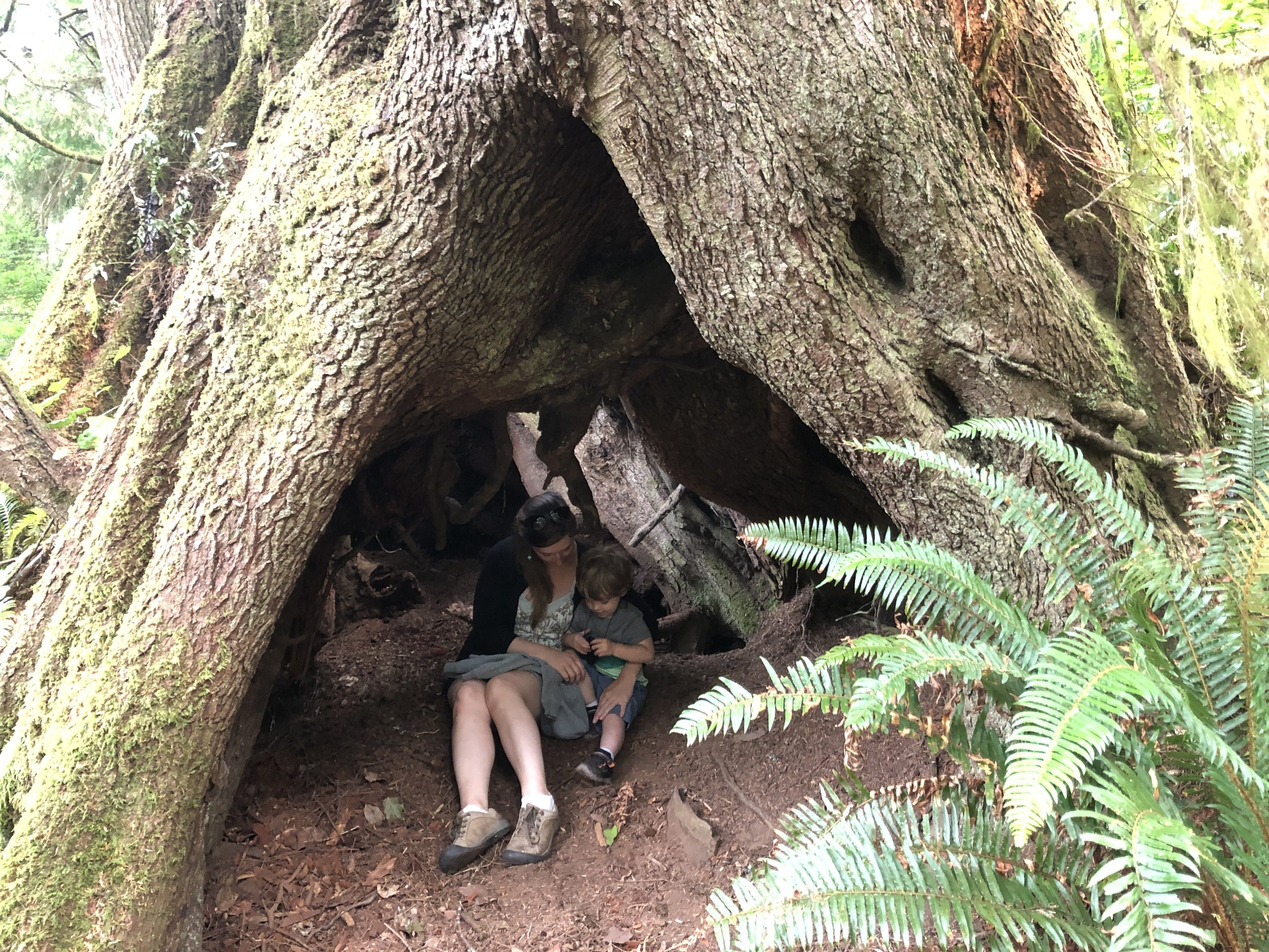 My son & I exploring an old tree in the Pacific Northwest coastal woods.