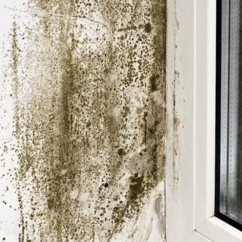 Well, that looks scary. But, there is no way to know if it's black mold without testing.
