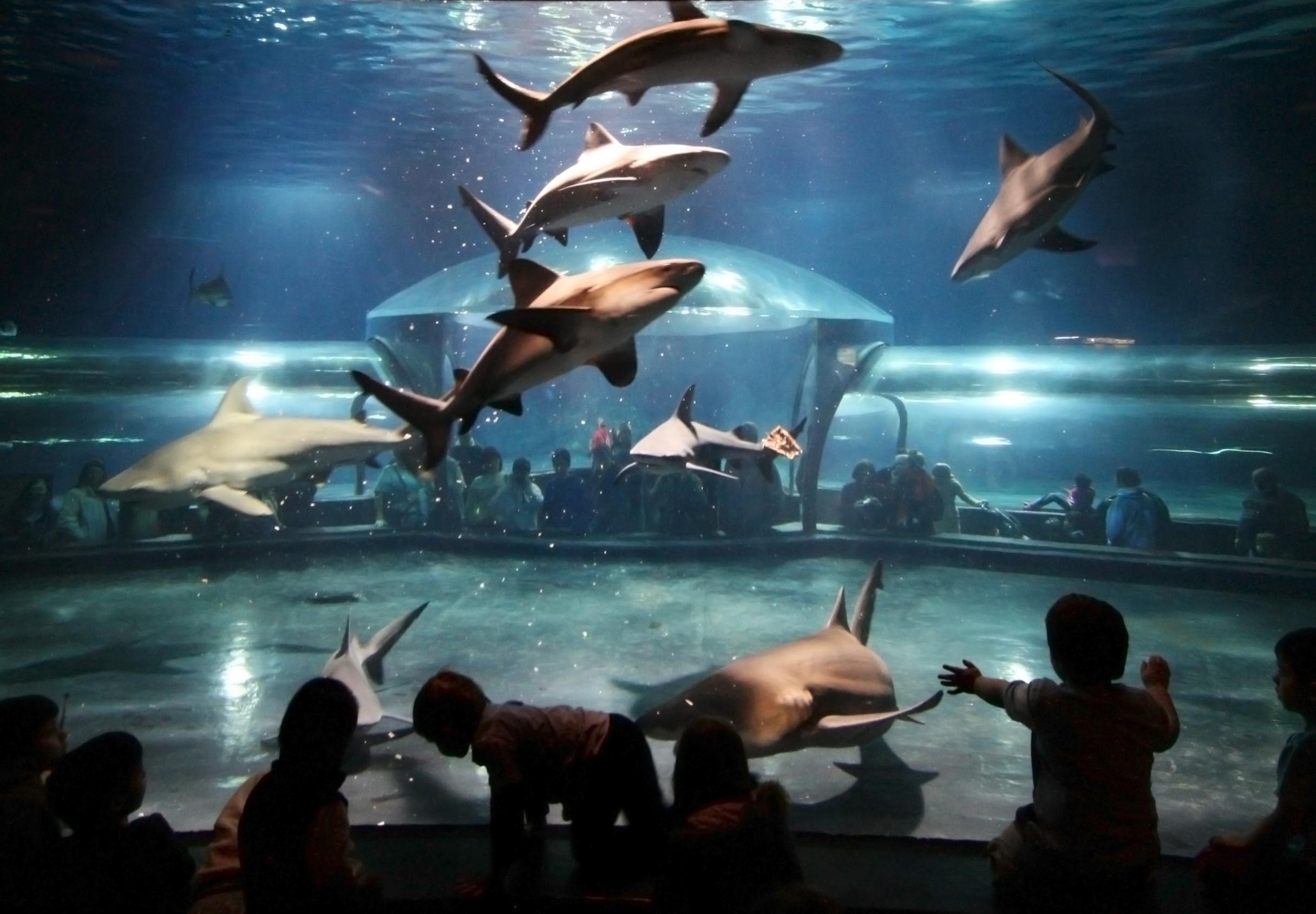 sharks-crop.jpg