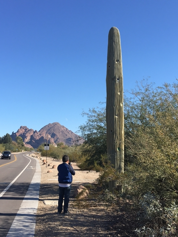 Daniel photographing a cell phone tower fabricated to resemble a saguaro cactus. 12-18-15