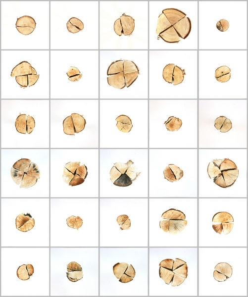 Firewood #1-30 , 2013-1/em> Watercolor on paper Each 10.25 x 10.25 inches