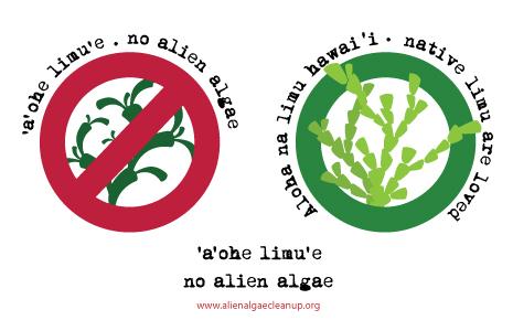 no_alien_alg.jpg