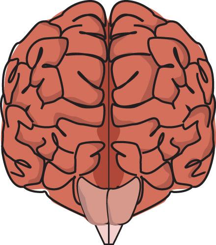 brain_plain.jpg