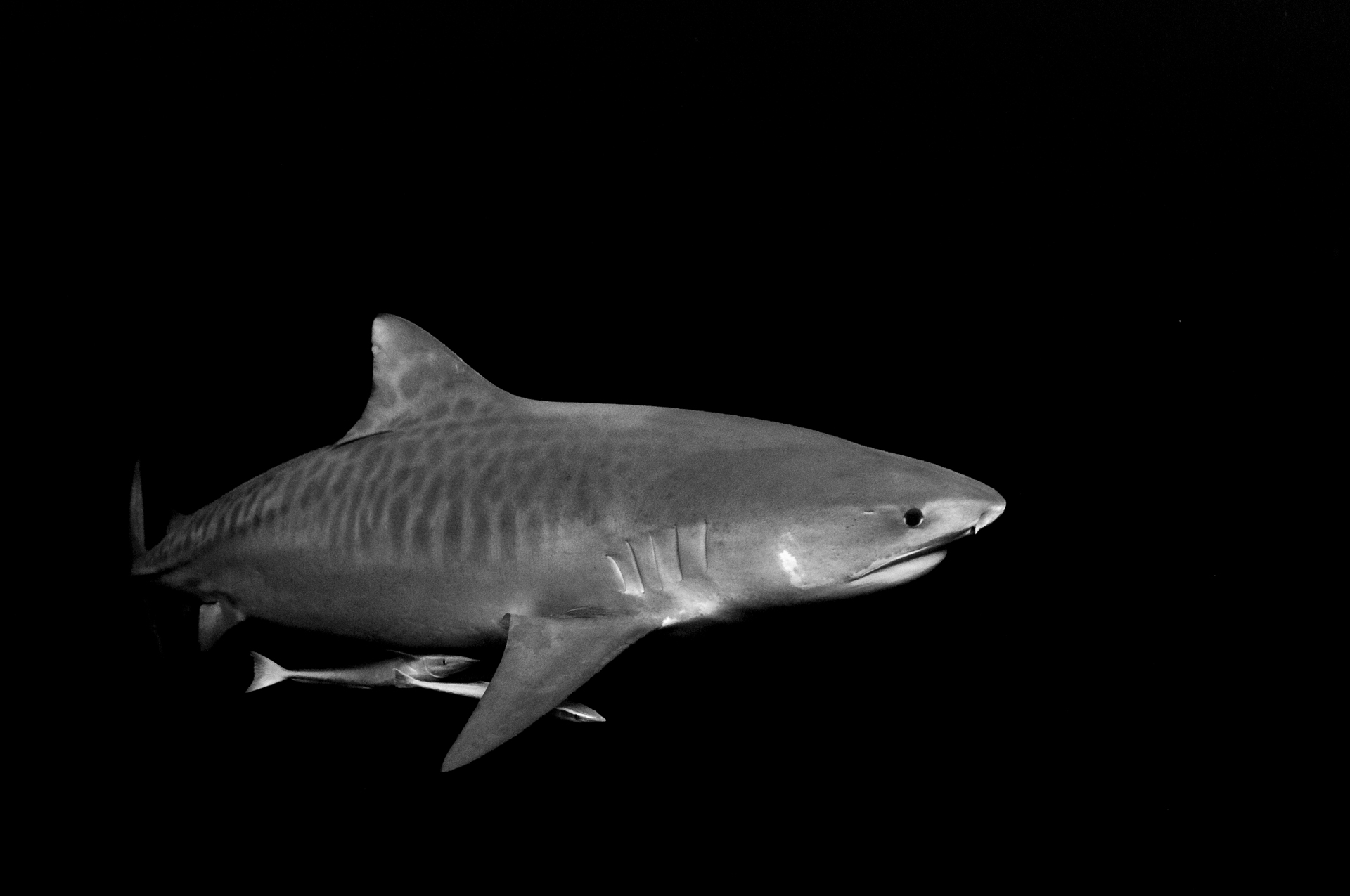 shark safari east africa swim with sharks.jpg