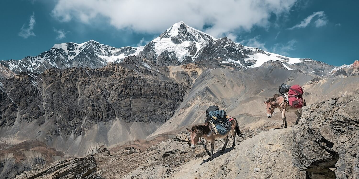 Frequently Asked Questions - Travel Insight → Trekking Essentials