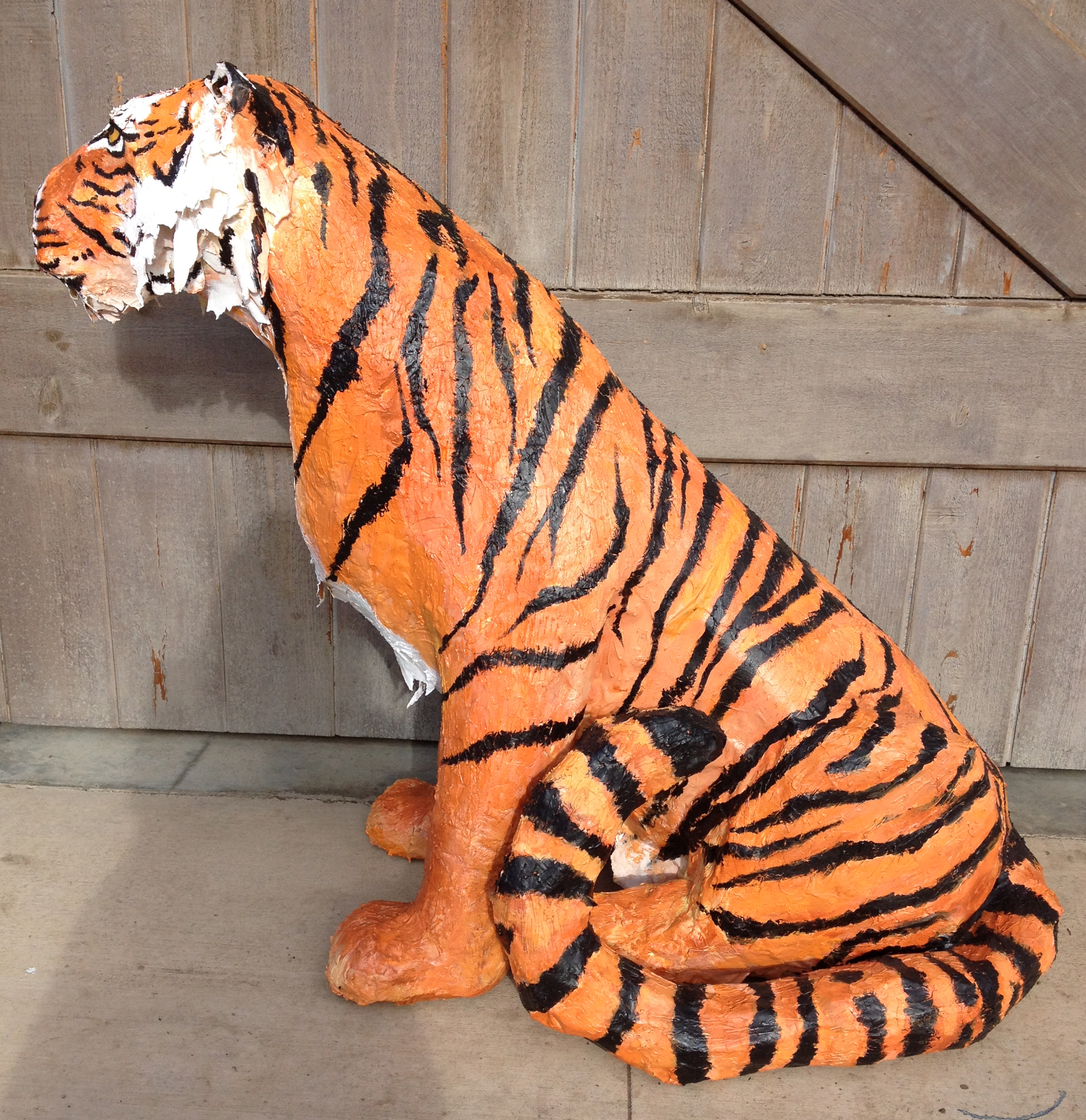 Tiger side view