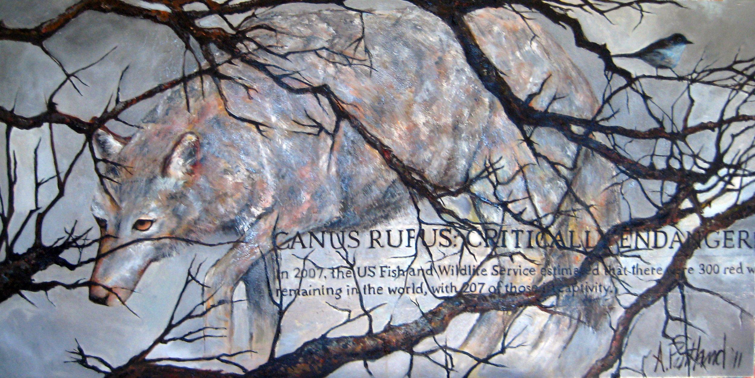 Canus Rufus