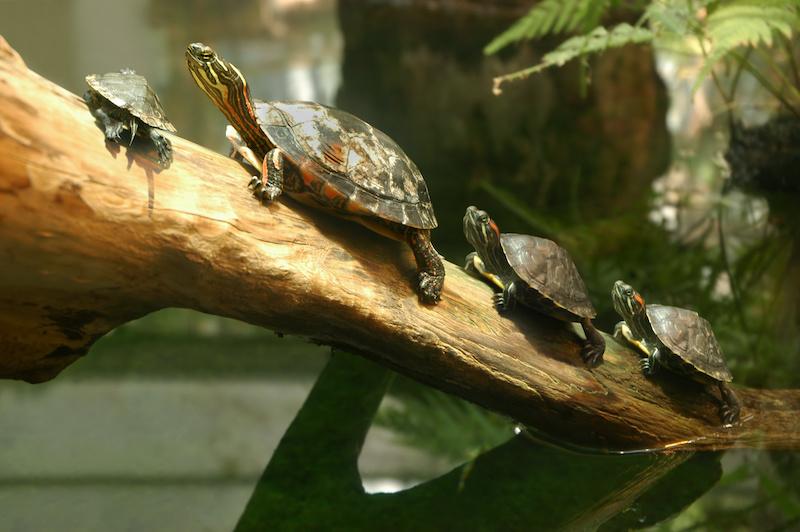 Turtle Bay - Little Explorers - Turtles