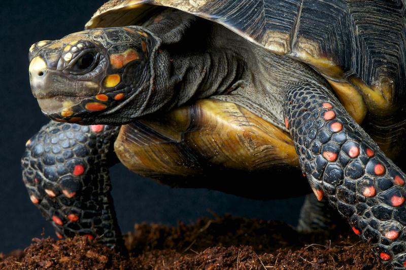 Turtle Bay - Little Explorers - Turtles 3