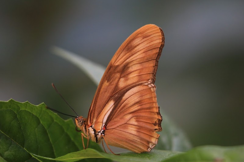 Wings of Summer: Butterflies! - The butterfly exhibit offers guests a unique opportunity to see up to 32 species of butterflies found throughout the United States in a tranquil garden enclosure in the summer.2018 Opening Coming Soon!