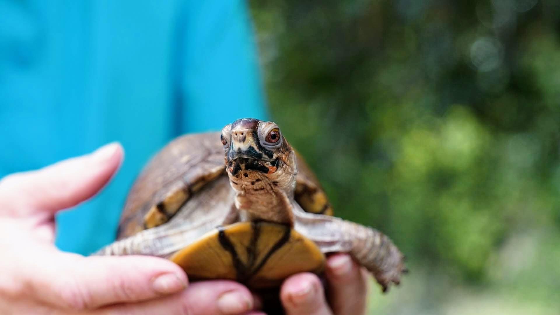 4. Turtles .00_00_38_07.Still004.jpg