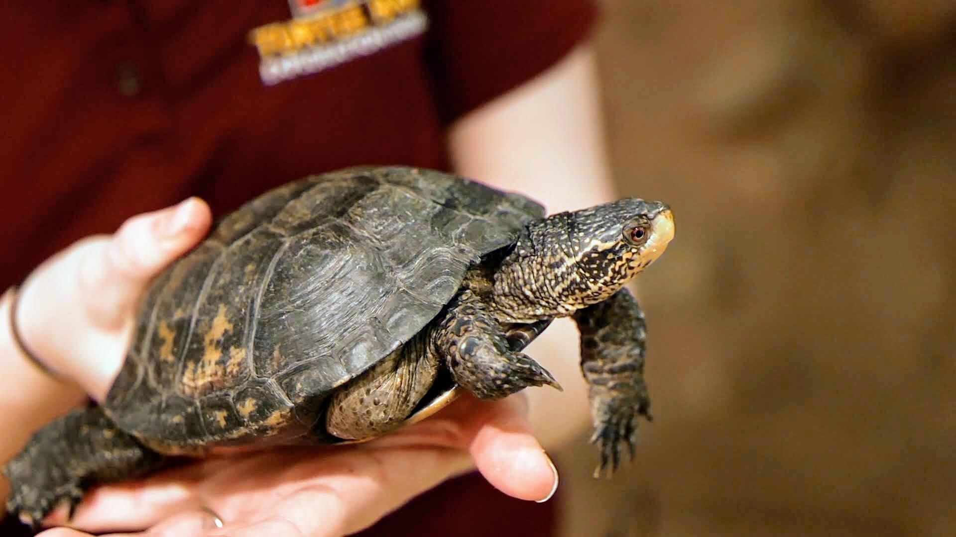 4. Turtles .00_00_52_17.Still005.jpg
