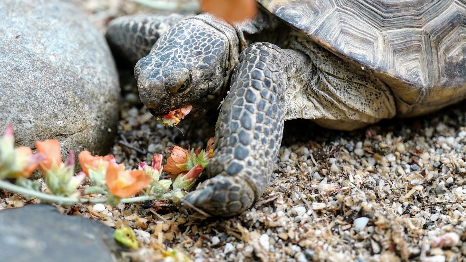 4. Turtles .00_00_26_11.Still003.jpg
