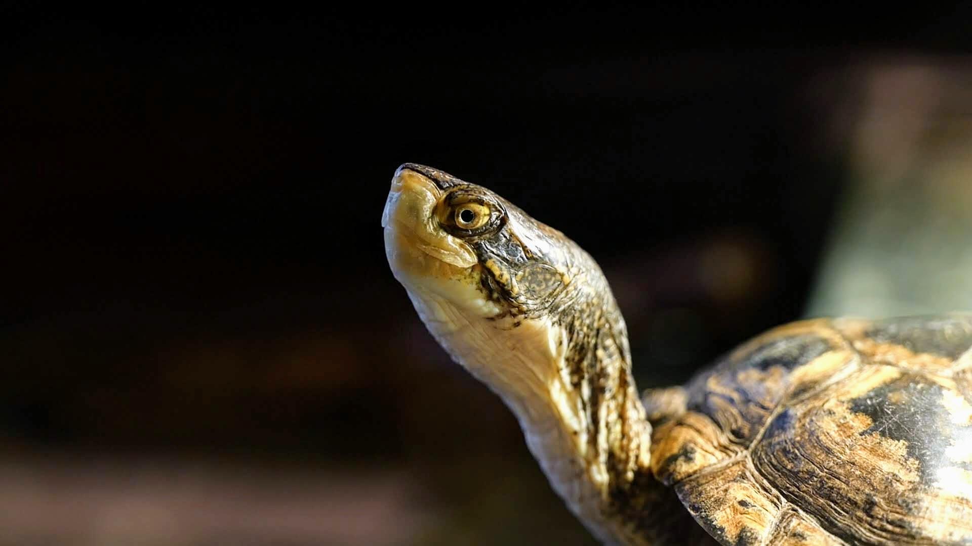 4. Turtles .00_00_57_19.Still006.jpg
