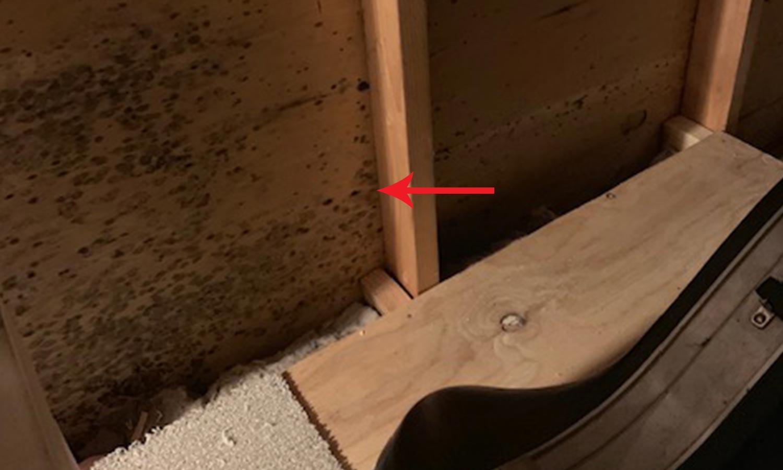 attic-mold-1.jpg