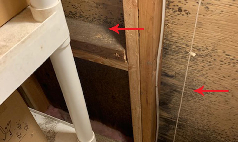 attic-mold-2.jpg