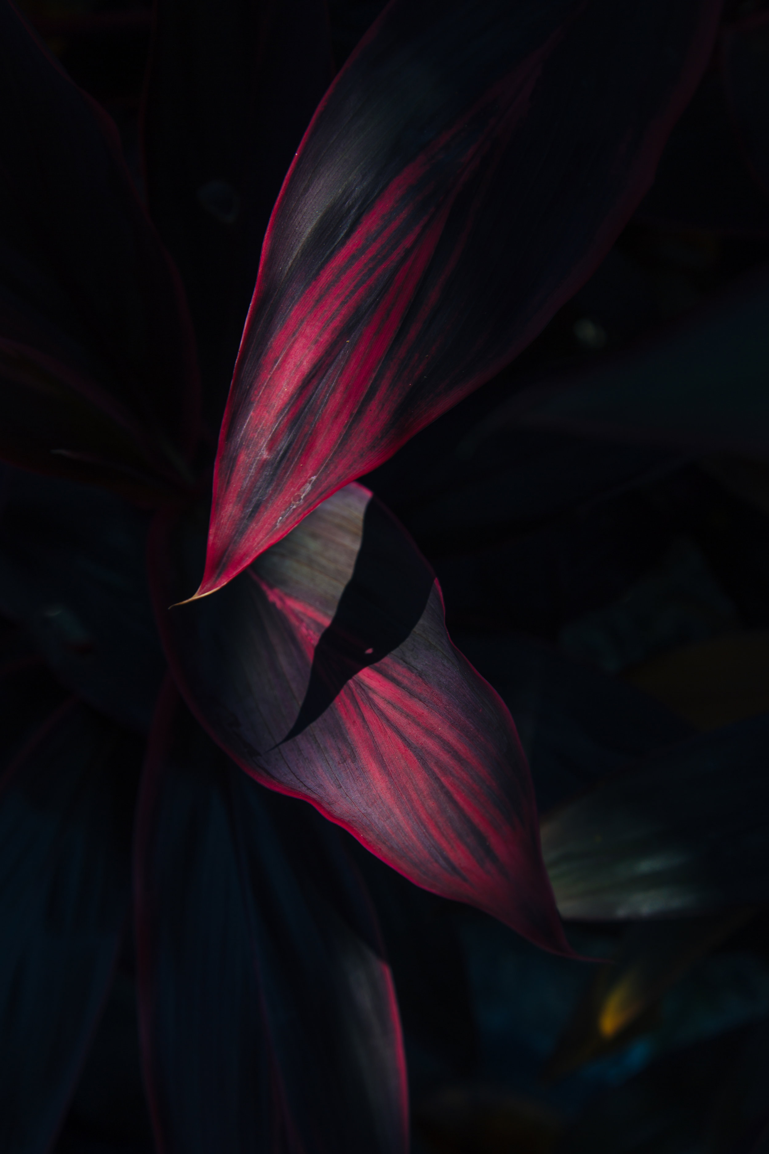 Langkawi dark leaves