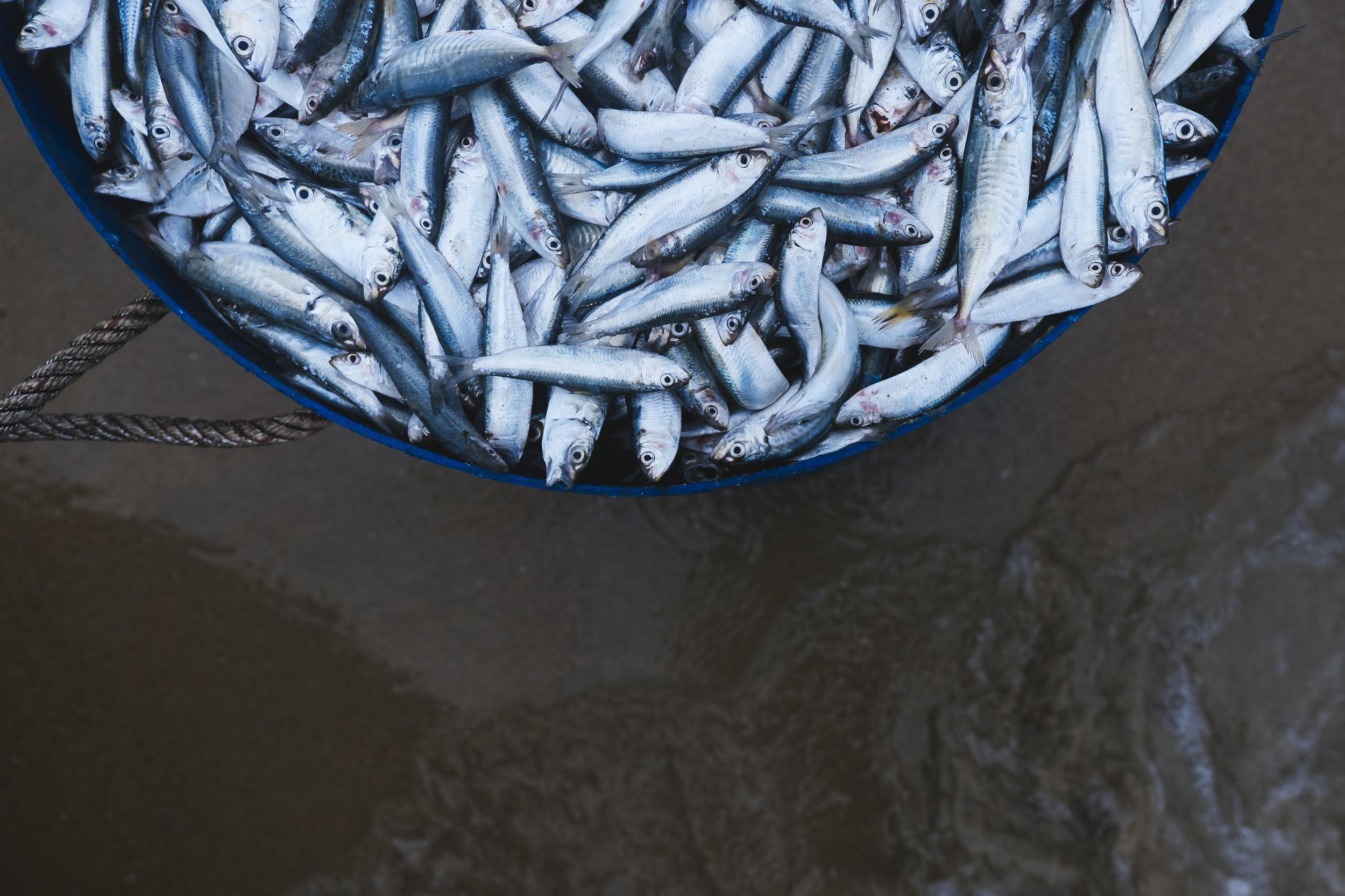 Vietnam-fresh-catch