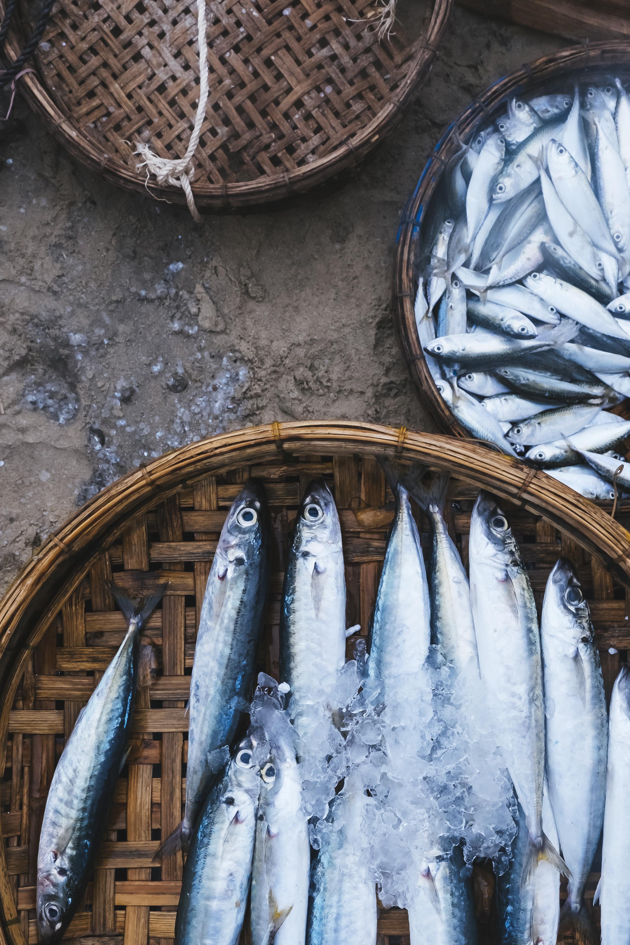 fish-on-sale