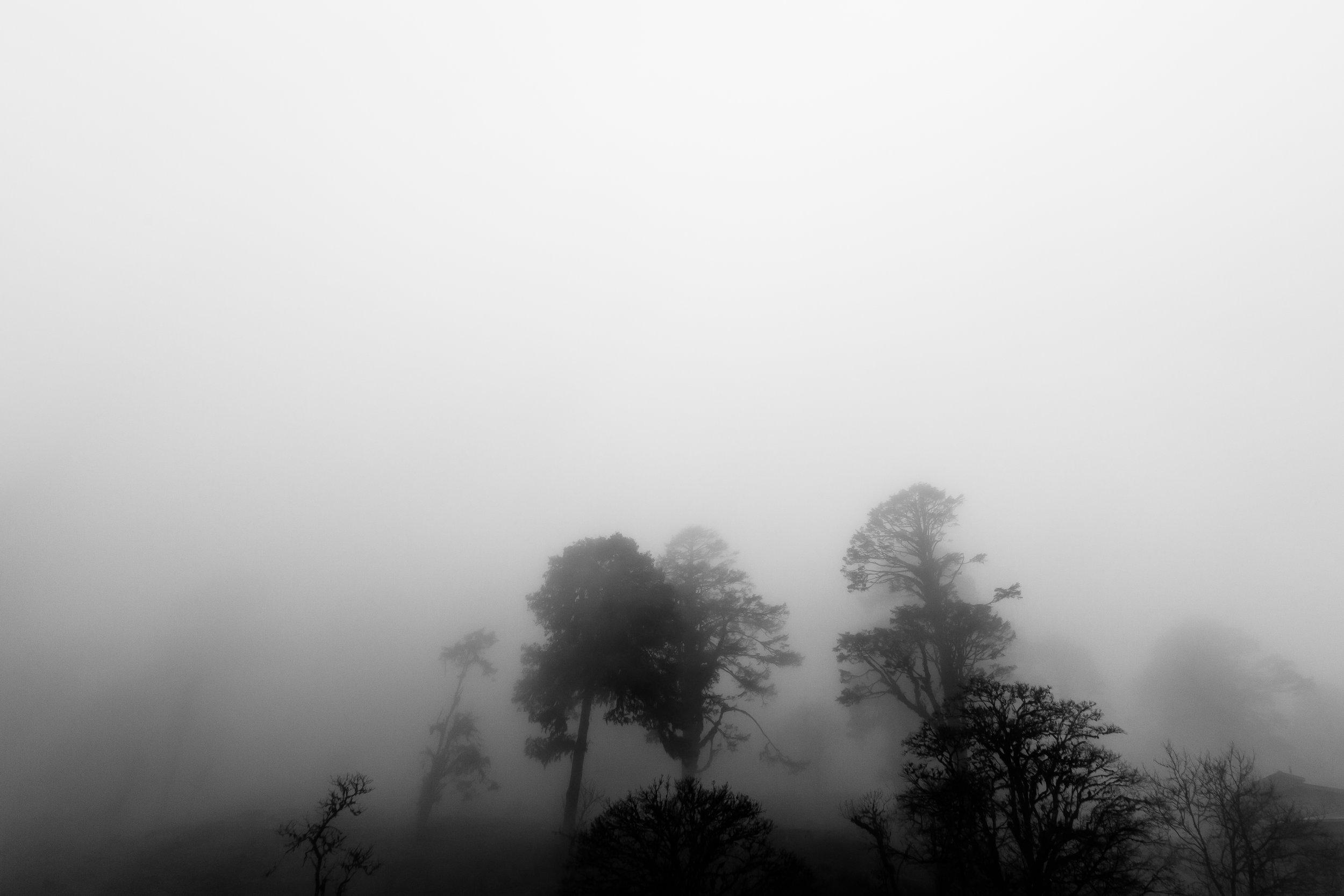 Bhutan-fog-trees.jpg