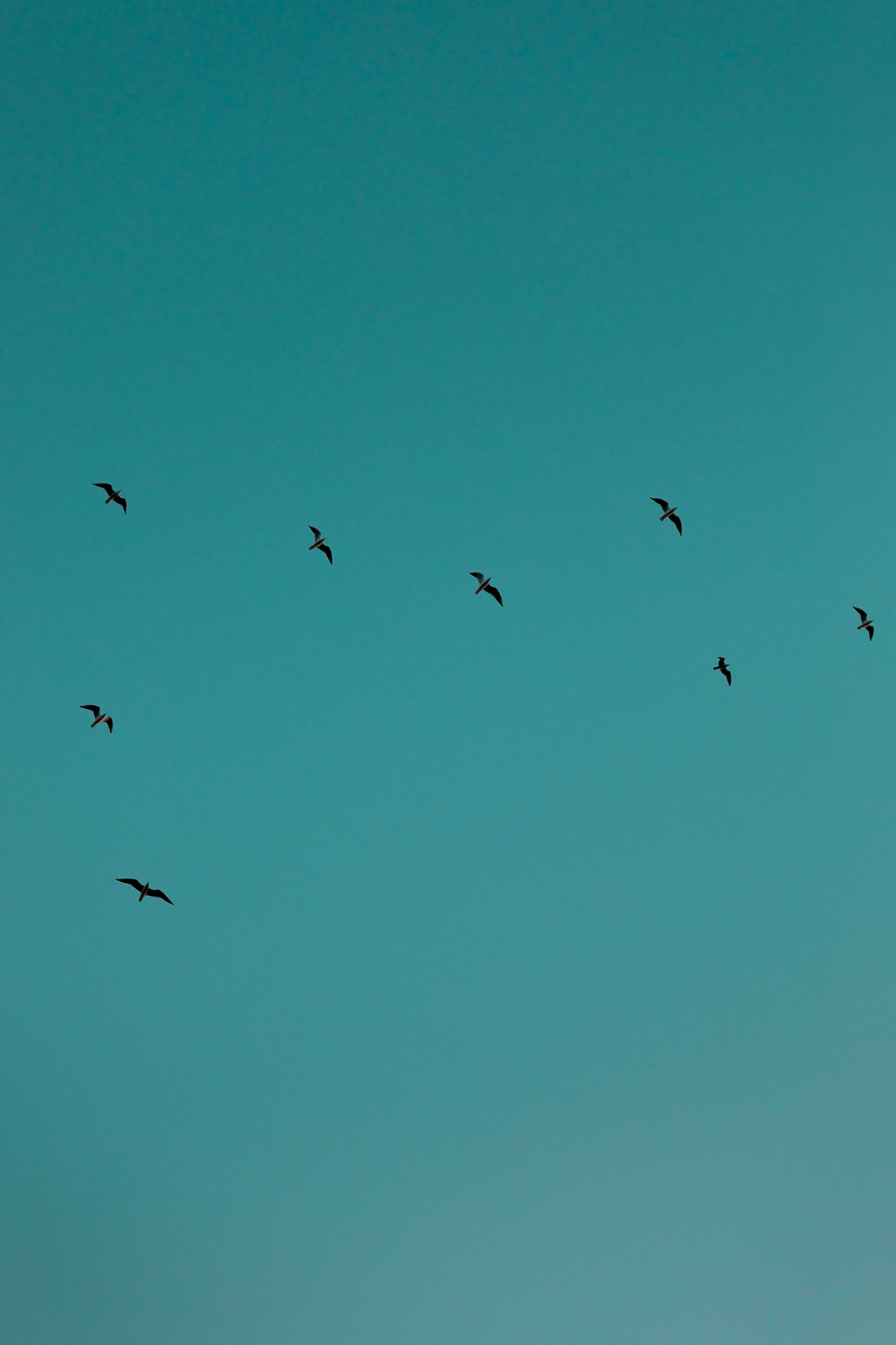 birds-in-flight.jpg