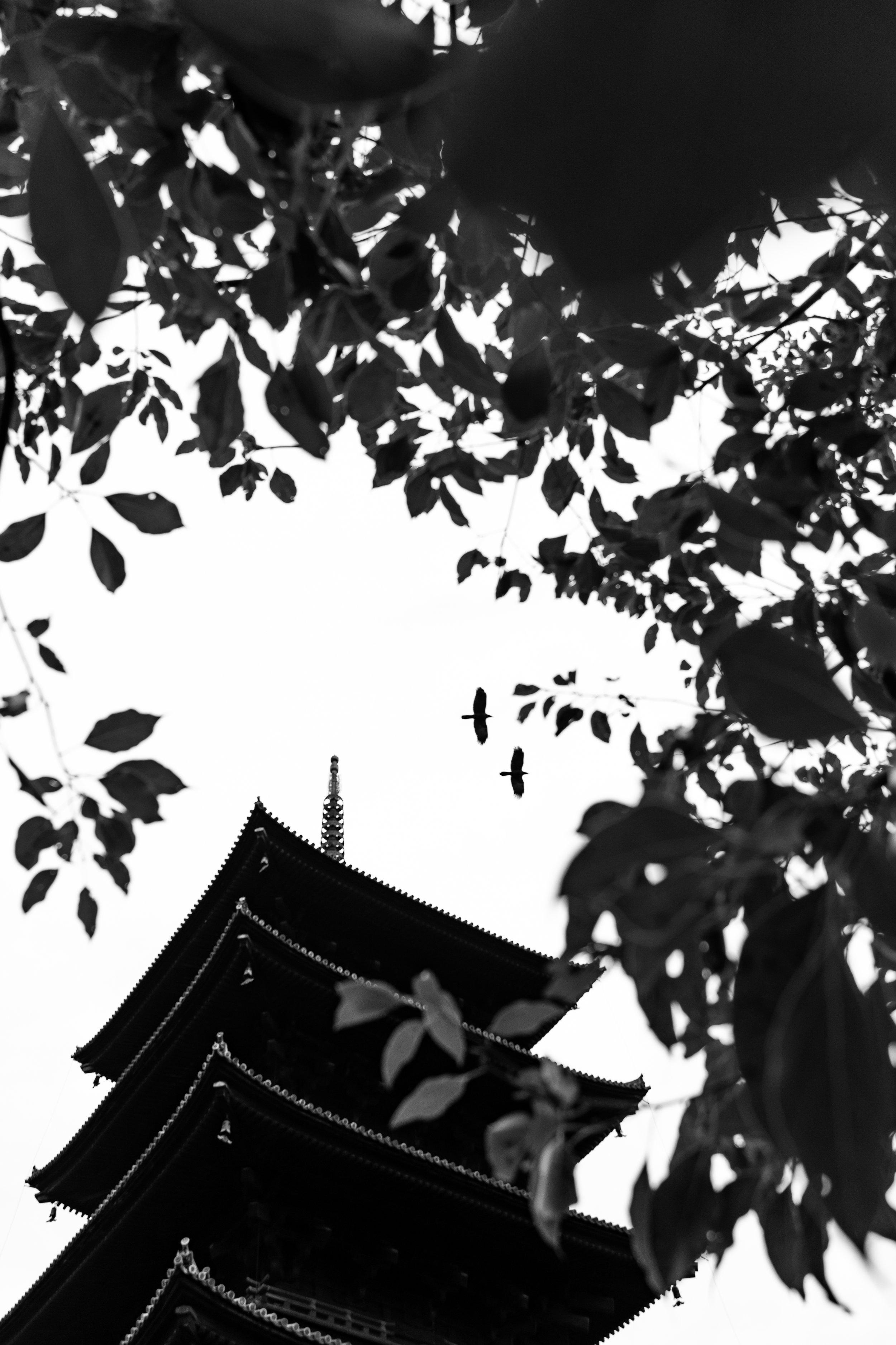 pagoda-birds.jpg