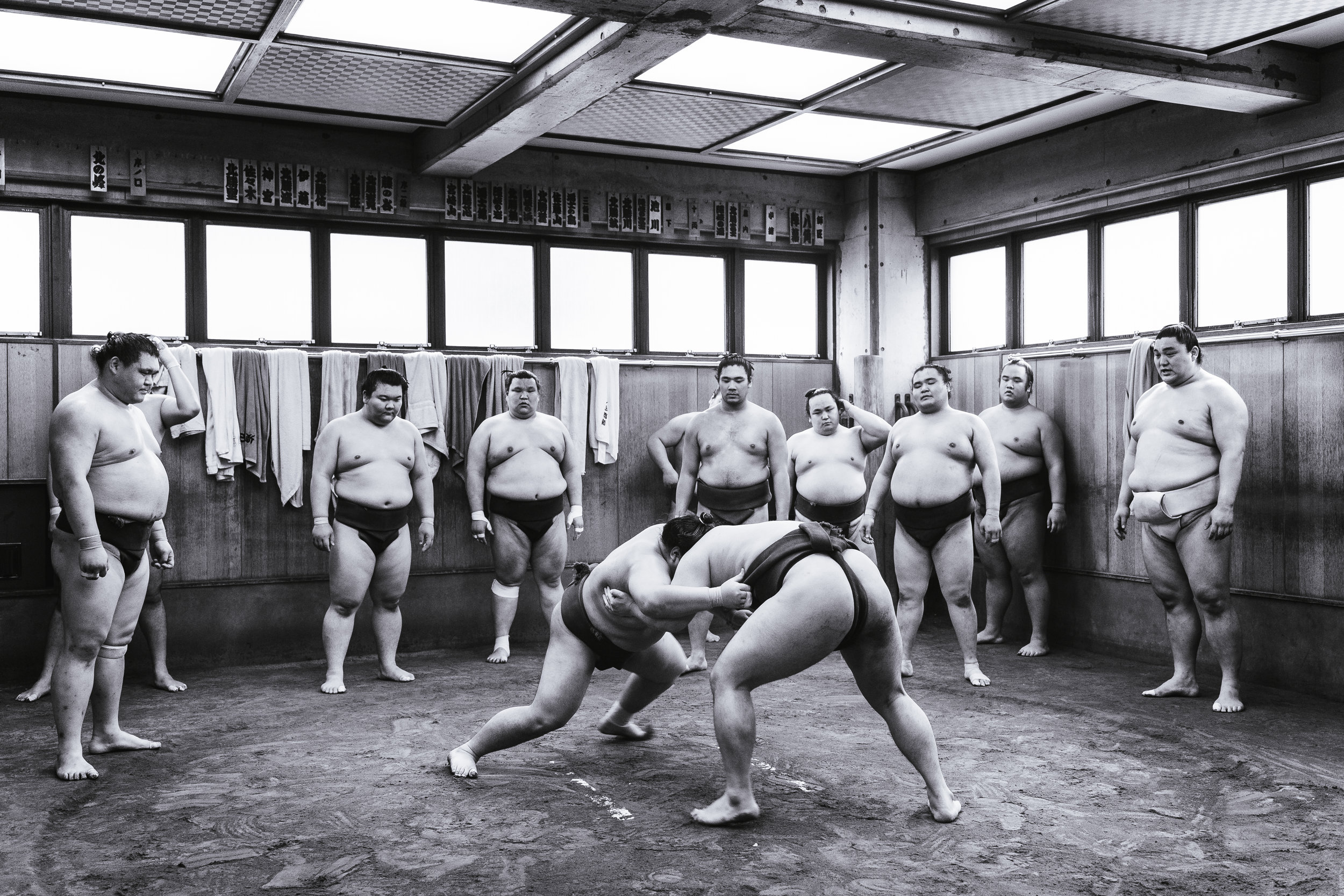 Sumo Stable