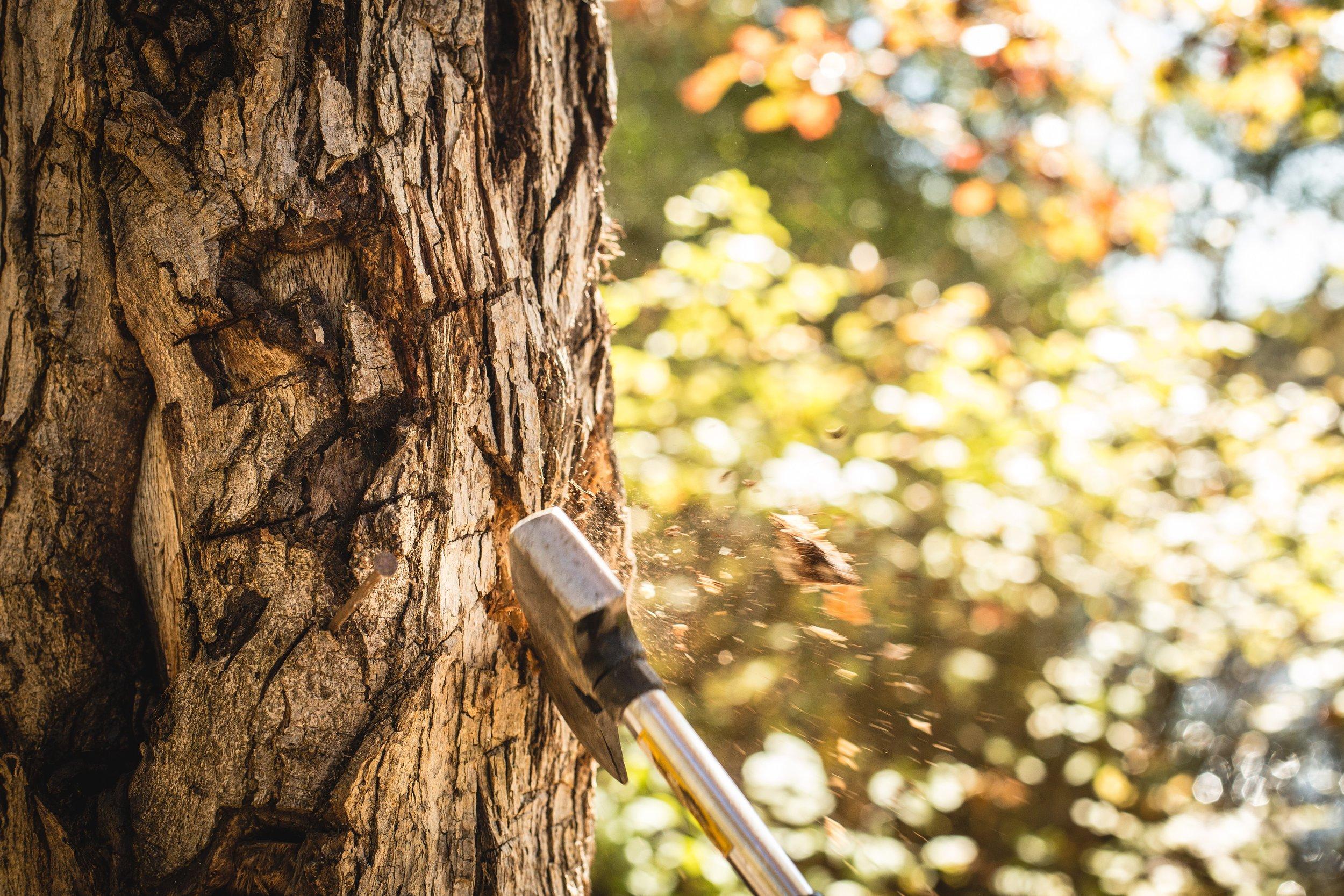 ax-axe-cut-a-tree-12157.jpg