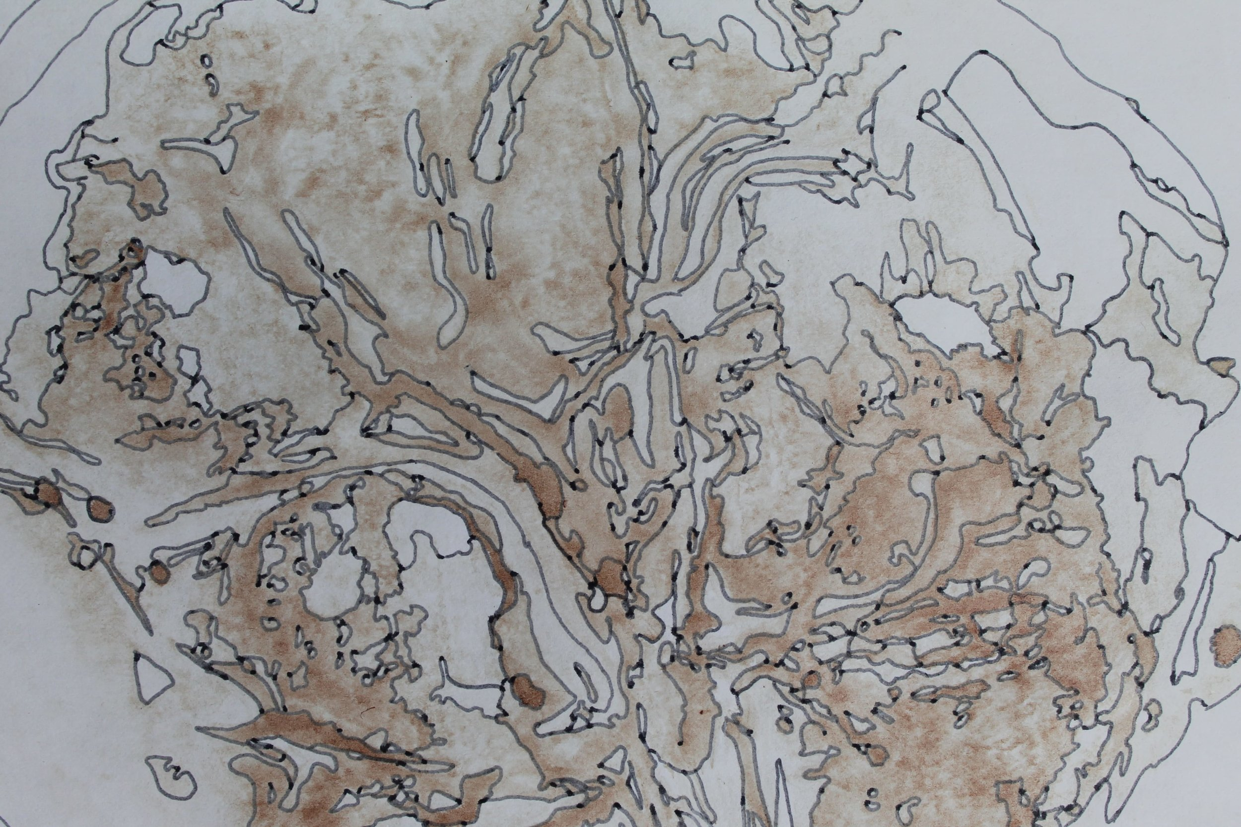 A section of a placenta print where a pen has been used to draw around the different shaded areas creating a beautiful, delicate image.