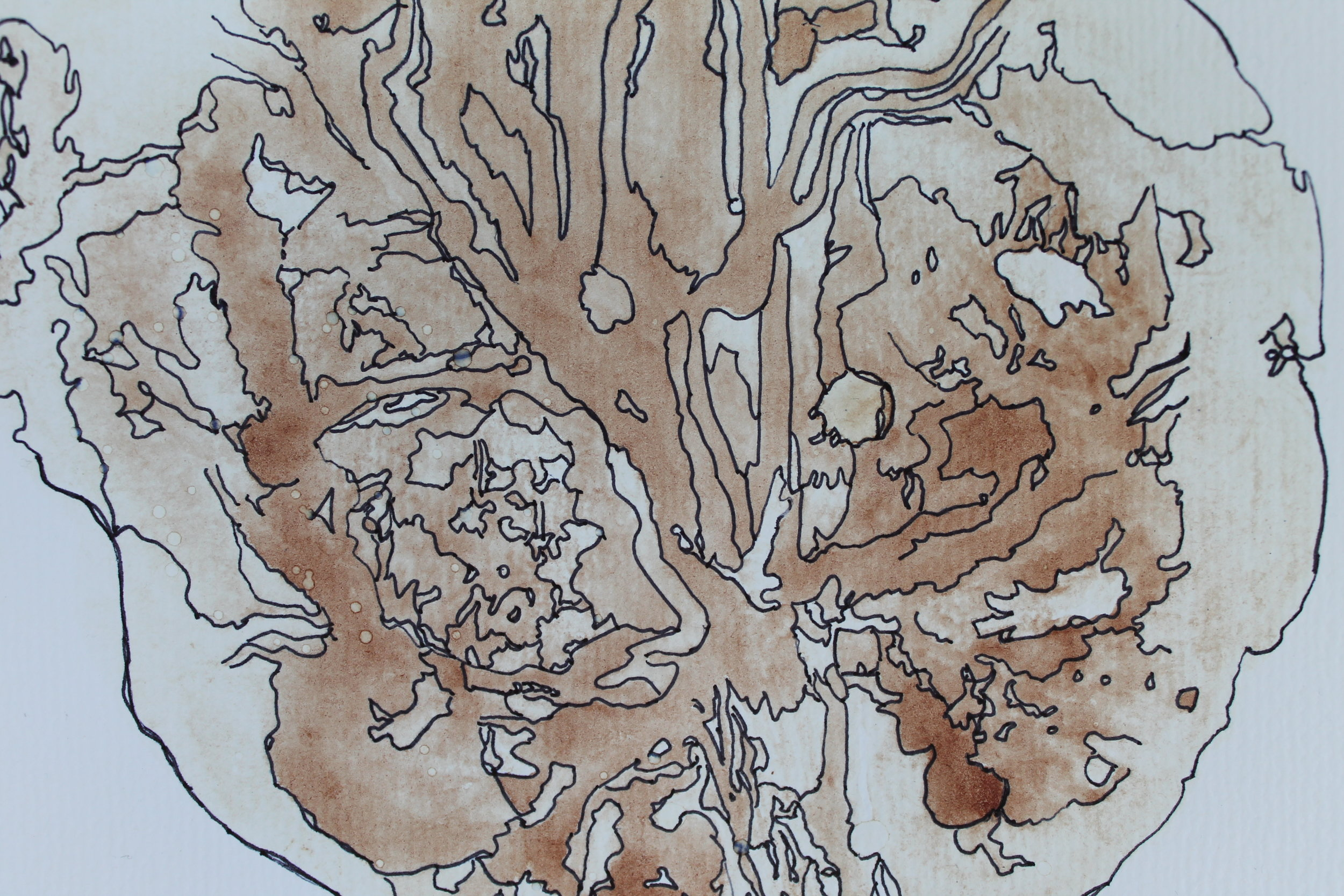 Placenta Print - Process: A piece of sketch paper is pressed down onto the placenta and once the resulting print is dried the patterns are drawn around to pull out the detail of the print. Many clients have the print as wall art or simply retain it as a keepsake.Cost: £10