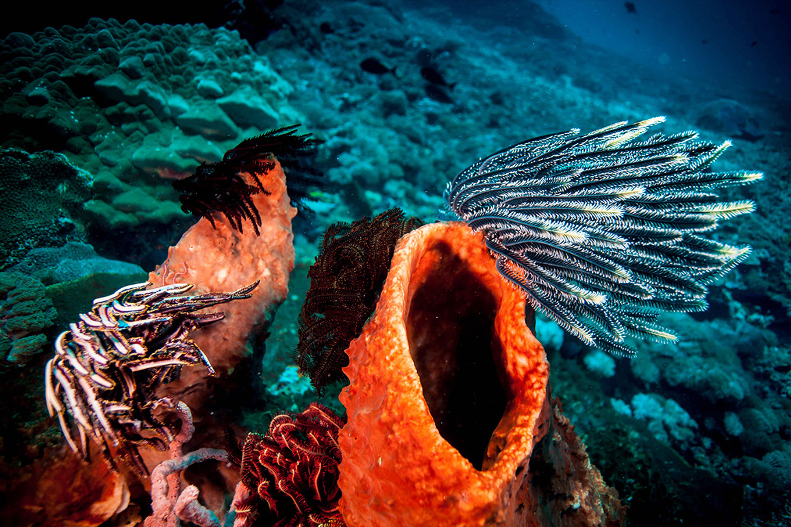 Engine Reef